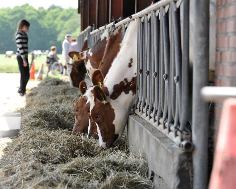 Bezoek een boerderij in je zomervakantie