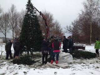 Ondernemers plaatsen weer kerstboom